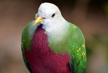 Pretty Birds / by Kristen S