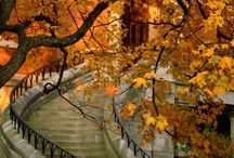 Romantic Stairways / by Vicky Logan