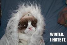 Grumpy Cat ♥ / I ♥ this cat :)