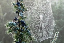 Webs / by Vicky Logan