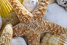 Seashells / by Vicky Logan