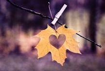 autumn / autumn, fall, autumn leaves, autumn scenery, fall leaves, fall scenery, seasons