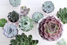 succulents, air plants, cactus / succulents, air plants, cactus, diy, terrarium, indoor, outdoor