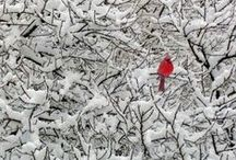 winter / winter, winter wonderland, winter scenery, snow, cold, seasons
