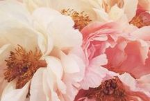 flowers / flowers, flower arrangements, flowers diy, flower bouquets, flower centerpieces