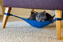 pet decor / pet decor, pet design, pet friendly, pet friendly home