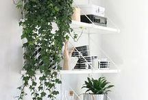 Room decor / White,Black and plants