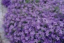 Garden Ideas / Herb, Vegetable, and Flower Gardens