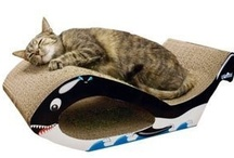 My cats want this