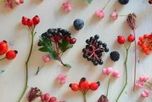 Fruits & Berries / by GentleDecisions