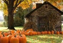 Beautiful Fall / by Ashley Hallinan-Cecil