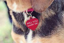 Wedding ❤️ DOG / by geemarge