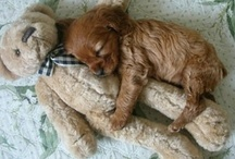 PICS TO MELT YOUR HEART! / by Pamela Rohrbaugh