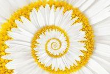Beautiful Flowers / by SueDee McClelland