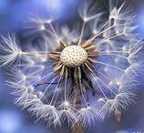 Macro & Flower Photography