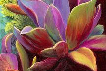 Gardening/succulents