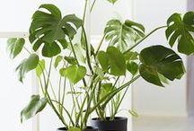 Eenig & Plants / Planten