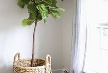 Indoor Plants / Indoor Plants | Indoor Plant Decor | Indoor Plants Low Light | Indoor Plants Clean Air