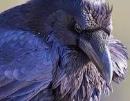 Refs: Birds