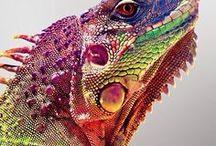 refs: frogs & lizards
