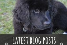 Latest posts from Big Dog Little Adventures / All the blog posts from Big Dog Little Adventures.