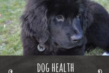 Dog Health / The health of your canine friend is extremely important, do not ignore any small ailments as they could become very costly.