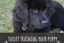 Toilet Training Your Puppy / One of the first tasks you need to teach your puppy is toilet training, there are lots of hints and tips to help your toilet train your puppy.