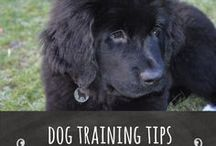 Dog Training Tips / Do you have a disobedient dog, are you looking for solutions, this board has all the latest information on training your dog.