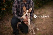 dog is good / Dog Photography :: Pet Photography