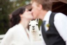 Offbeat Wedding / These offbeat wedding ideas may be a little off the wall, but we love them anyway. / by The Man Registry
