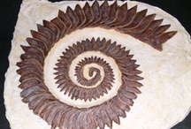 fossils / by Gail HaysConner