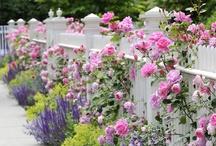 flowers-beautiful flowers / by Gail HaysConner