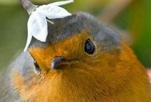 Envole Moi -°) #Birds / ♪♪♪ / by Cyntthia