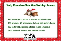 HSMO's Gift Guide - Give a Gift that Gives Back! / No matter what you're celebrating, there are great gifts and tributes from HSMO! Here are some easy ways to help pets in need at the Humane Society.