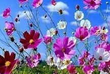 ♡ Les Couleurs Du Printemps ❀ #Spring #Pastel #Blue #Laundry #Flowers #Floral / by Cyntthia