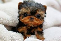 cuteness / Animals