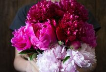 Bliss in Blossom / Peonies, cherry blossoms, tulips, lilacs, hydrangeas