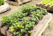 Ogrodnictwo / Moja tablica jest o inspiracjach do ogrodu