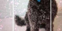 Life is Better with A Poodle / Poodles around the world, inspiration, quotes