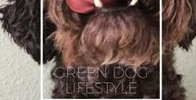 Green Dog Lifestyle / How to live sustainable with dogs and other furry friends. Tips and DIY for an ethical, fair, sustainable and of course healthy daily routine