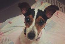 Adoptable Pets / by Christine Gassman