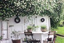 Summer Decor / Summer decor for your descorating your home for the summer season  I pool I beach I entertaining outdoors I picnic I patio I porch