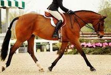 That Equestrian Life
