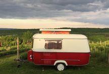 My sweet Eriba in my vineyard