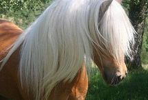 Horses / Here is some Horse pictures and arts
