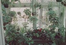 Plantlife, inside.