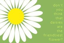 Flowers: Daisies
