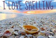 Sea Glass & Shell Treasures