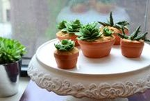Baked / Not a baker, but these recipes make me very happy! / by Spongetta