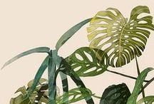 ~ plants ~~